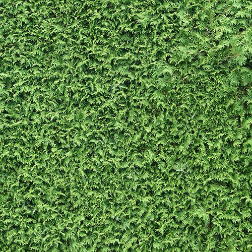 Hedges0027_2_L.jpg